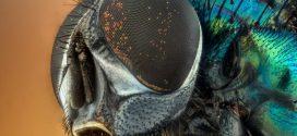 ساخت پوششهای نانو با الهام از قرنیه چشم مگس میوه