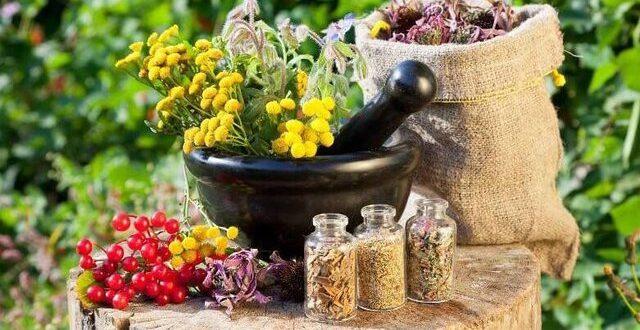ایران،خاستگاه ۸ هزار گونه گیاه دارویی بومی/ امکان کشت اکثر گونههای گیاهان دارویی دنیا در کشور