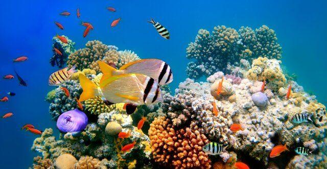 احیای دیواره بزرگ مرجانی، شکوه و زیبایی پیشین آن را برنخواهد گرداند